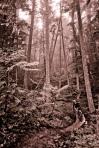 120722Strand-Buchar-Duncans-Trail2118